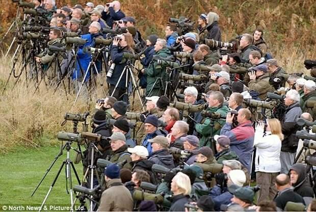 Рис. 2. Фото наглядно демонстрирует популярность любительской орнитологии в западных странах. Фото с сайта board.dailyflix.net
