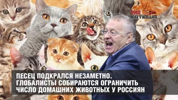 Песец подкрался незаметно. Глобалисты собираются ограничить число домашних животных у россиян