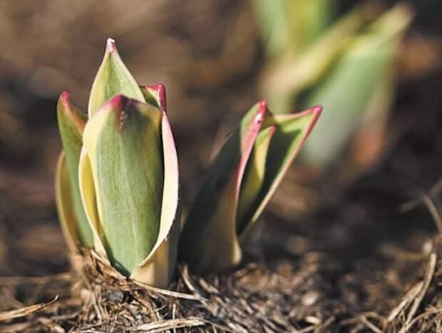 Сад, огород, цветник - как не пропустить сроки важных работ?