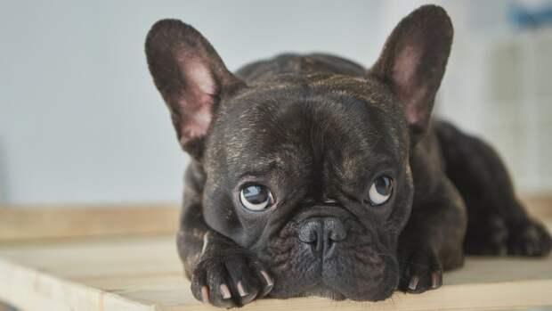 Пропавший пес нашелся спустя месяц в 1000 километрах от дома. Его продали новому хозяину!