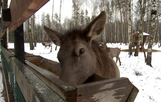 Пережить суровую зиму: как обитателям городских заповедников помогают в холода