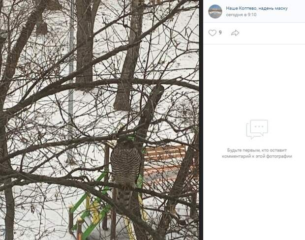Фото дня: лесной гость на бульваре Матроса Железняка