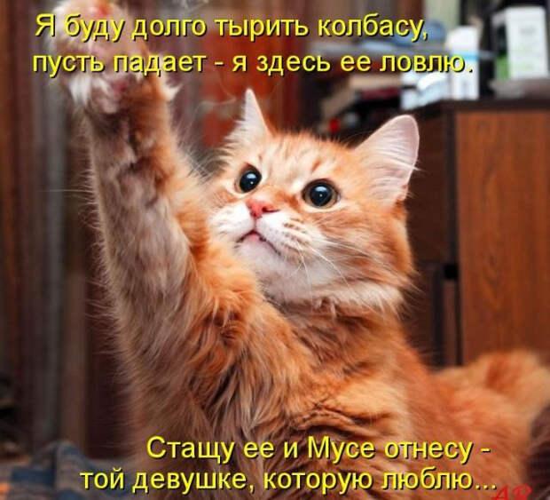 s3img_12398122_51245_1 (640x582, 317Kb)