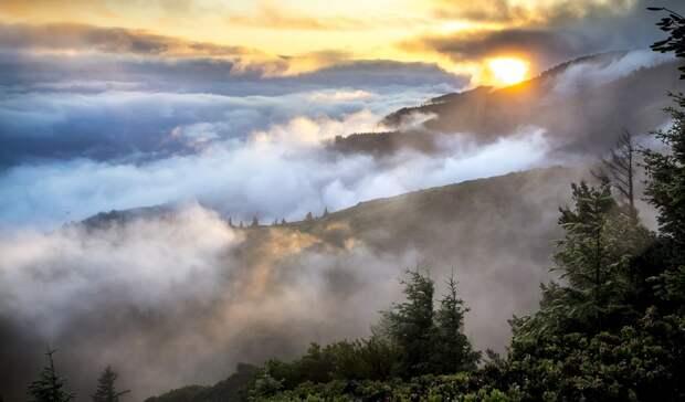 Более 7 тысяч гектаров леса пройдено огнем в Карелии