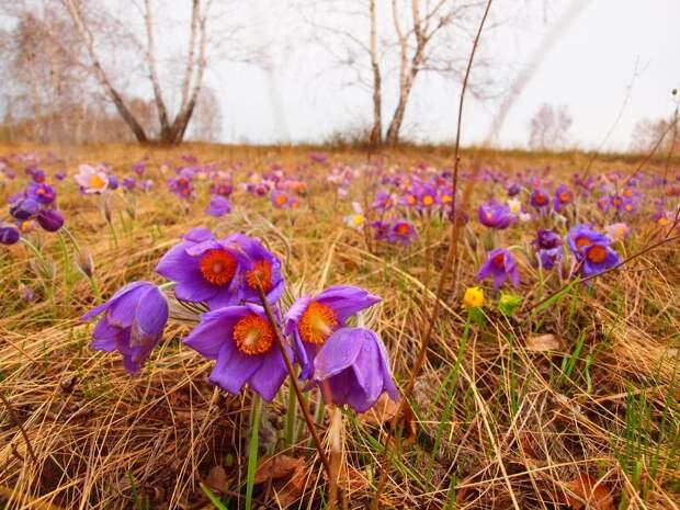 Погода в Удмуртии: в четверг осадков не ожидается
