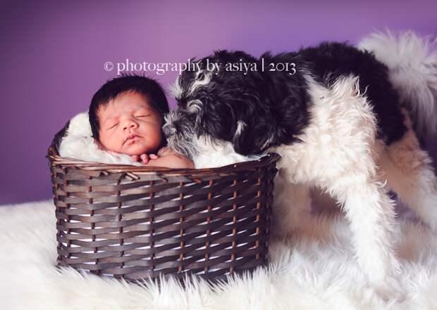 младенцы и собаки первая фотосессия (6)