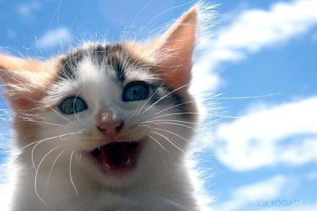 25 смешных котов, которые явно перебрали с кошачьей мятой