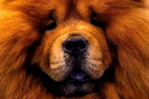 Выставка собак Crufts Dog Show 2015