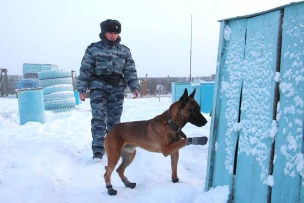 Якутские зоны будут охранять южнокорейские клоны