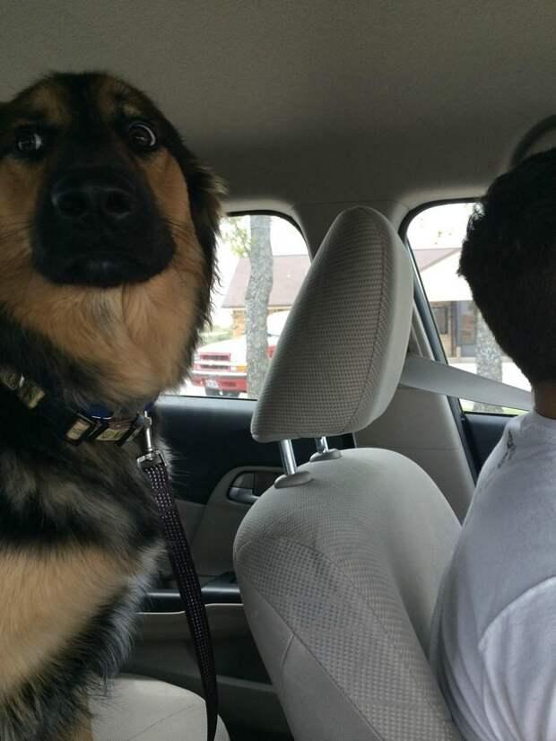 7. Пугливый пассажир ветеринар, животные, милота, собаки