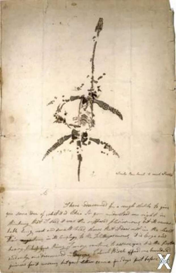 Письмо и рисунок Мэри Эннинг 1823 год...