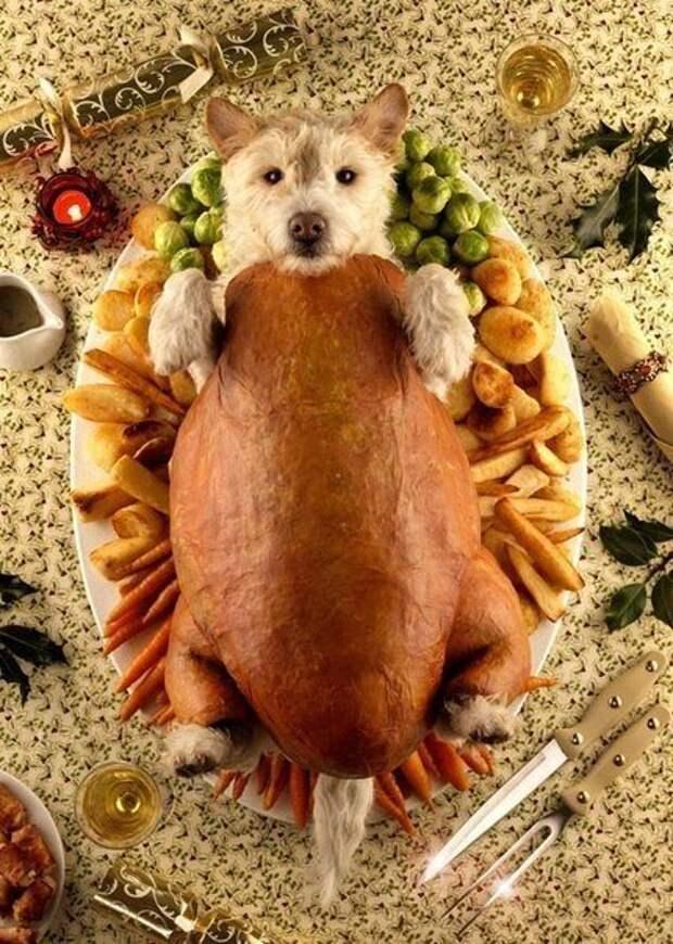 Фотограф делает креативные рождественские открытки с помощью своего пса