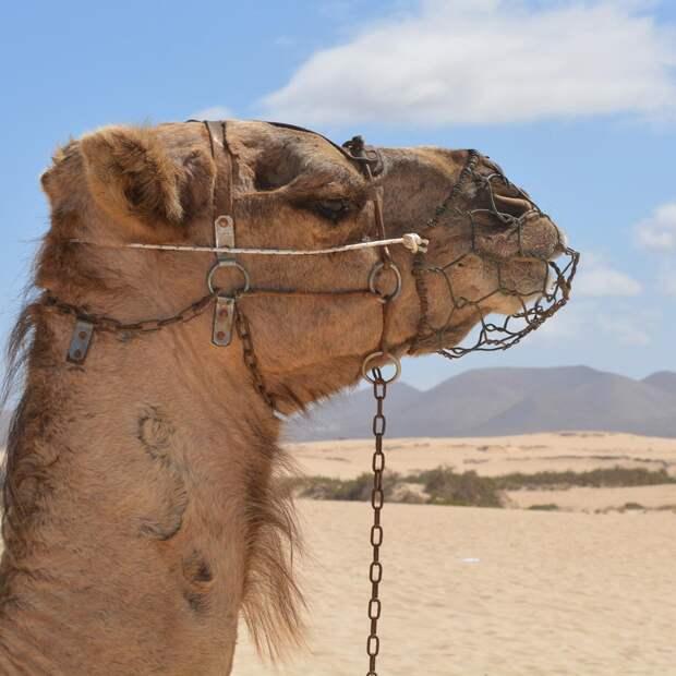 Невероятный факт: Саудовская Аравия импортирует песок.