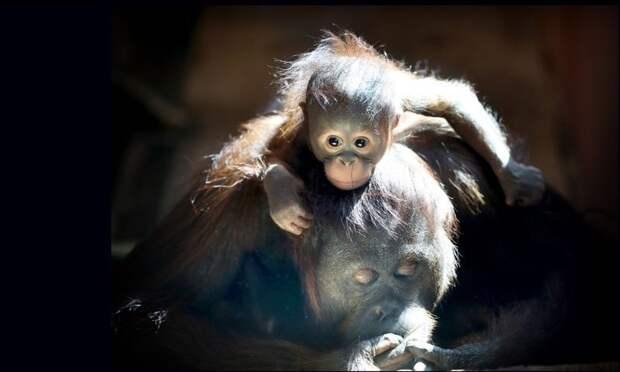 Мамаши и детеныши, повышаем гормон счастья детеныши, дети, животные, забота, звери