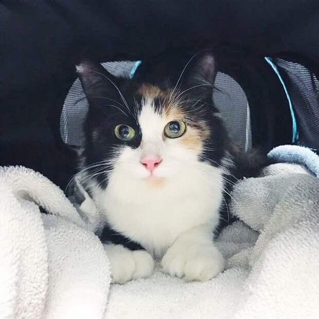 Бездомная кошка в страхе пряталась под машину, а в животе у нее бились котята