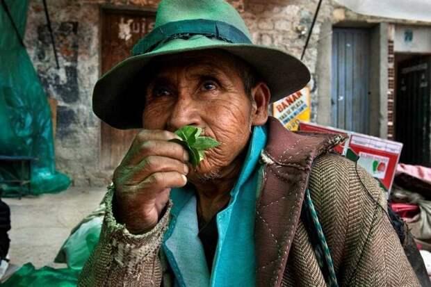 От полей до ноздрей: путешествие кокаина в фотографиях