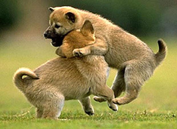 http://zooclub.ru/attach/wild/282.jpg