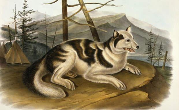 Верный друг: безвозвратно исчезнувшие собачьи породы