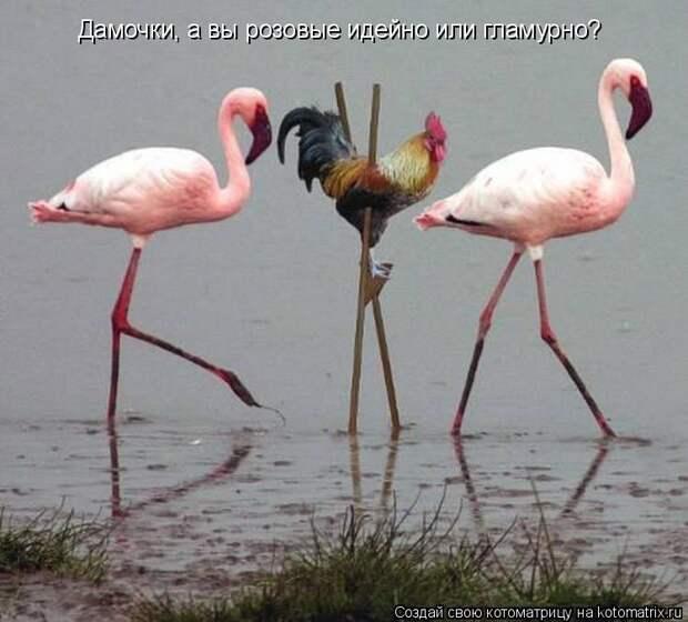 Котоматрица: Дамочки, а вы розовые идейно или гламурно?