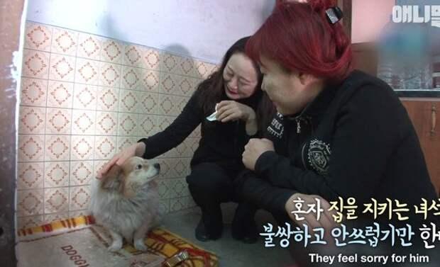 Уже третий год маленькая «корейская Хатико» ждет хозяйку, которой не суждено вернуться