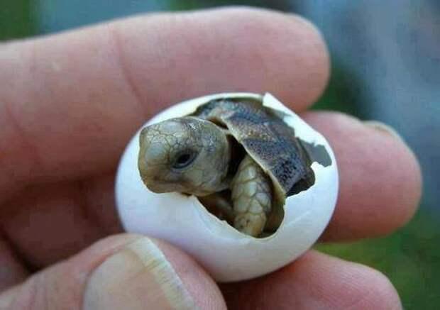 Новорожденные животные животные, интересное, познавательное, юмор