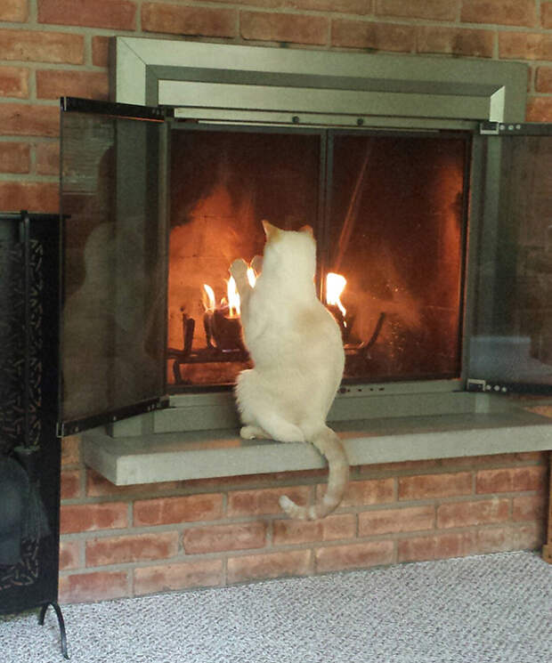 17 кошек, которые любят тепло больше всего на свете