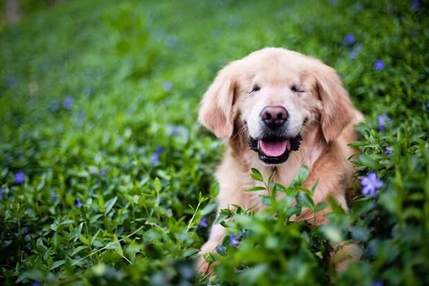 Собака без глаз помогает людям