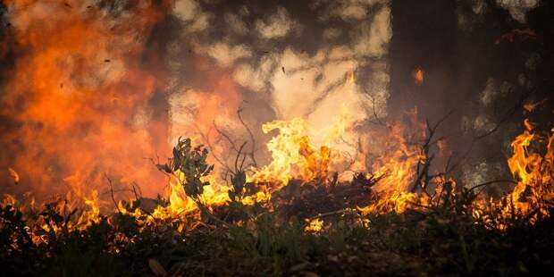 МЧС: потушены все природные пожары в России