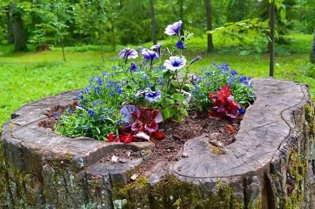 Пень как декоративный элемент сада (29 фото)