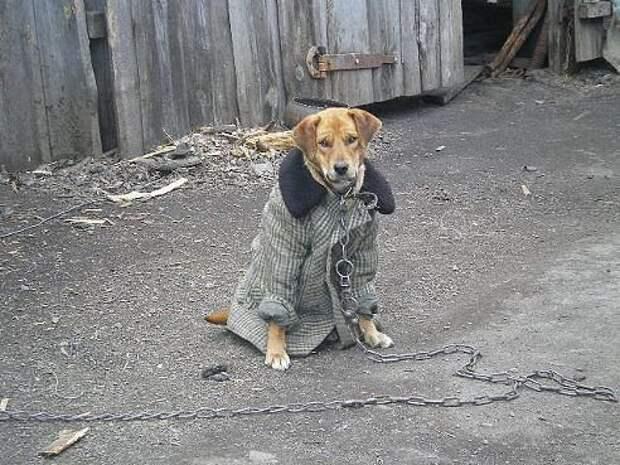Тайная жизнь домашних животных: скандалы, интриги, расследования