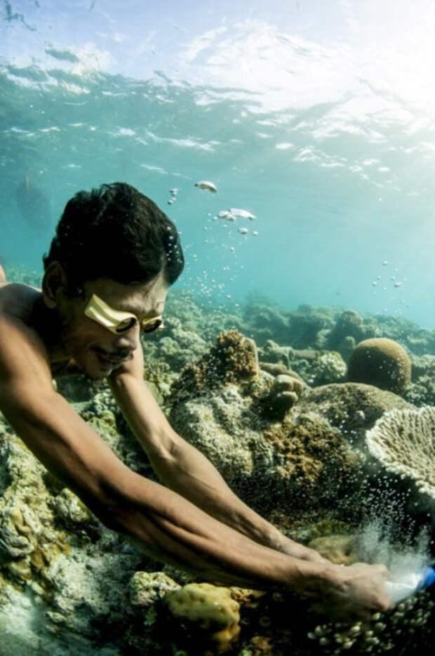 В последнее время баджао все чаще отказываются от традиционных методов рыболовства в пользу цианида и динамита. Ученые считают, что в результате таких варварских способов добычи в этих краях уже в ближайшие несколько лет могут полностью исчезнуть около 500 видов рыб, а также будет нанесен непоправимый вред кораллам.