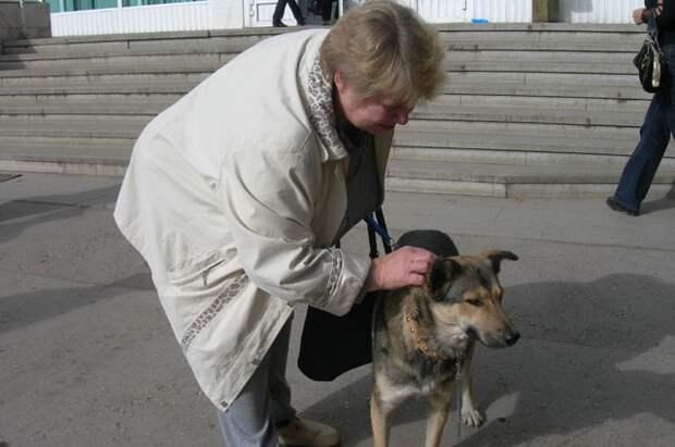 Собачья верность. В Самаре пес отыскал хозяйку спустя пять лет