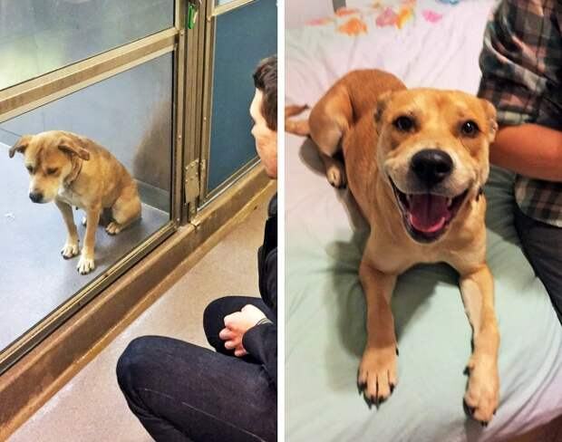 Люди взяли собак из приютов, и их фото «до» и «после» говорят о счастье громче слов