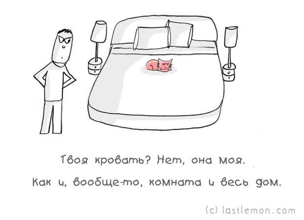 catsaask11