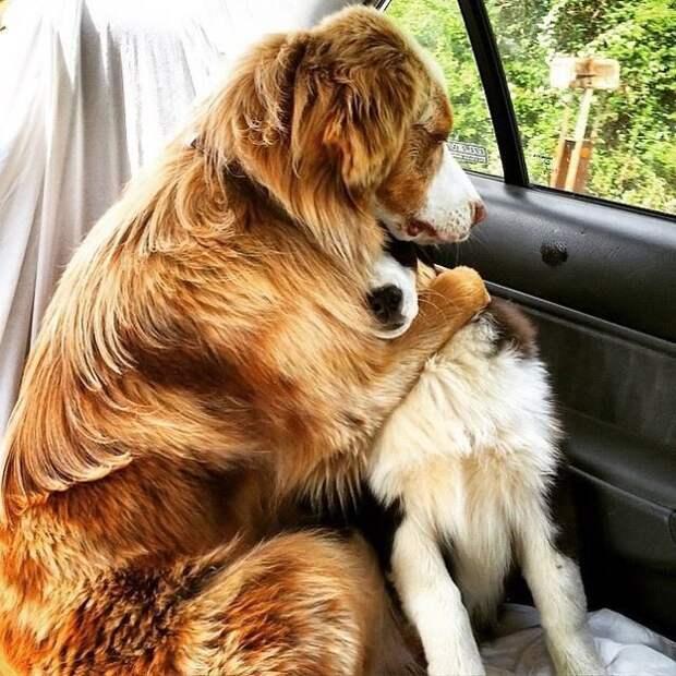 8. Вместе в горе и в радости, в здравии и в болезни ветеринар, животные, милота, собаки