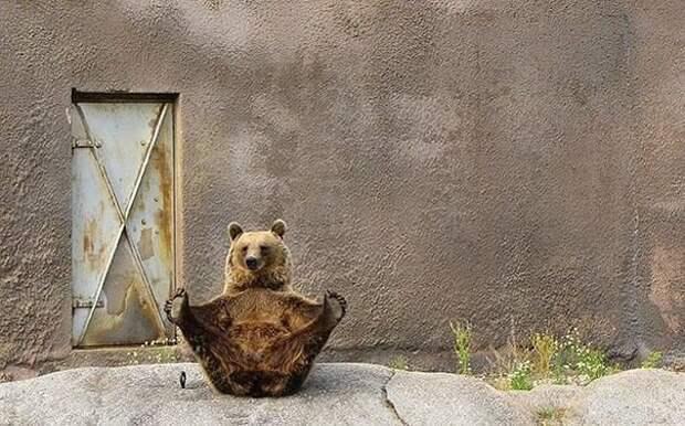 Чем занимаются медведи в свободное время животные, юмор