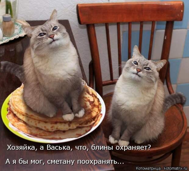 Котоматрица: Хозяйка, а Васька, что, блины охраняет? А я бы мог, сметану поохранять...
