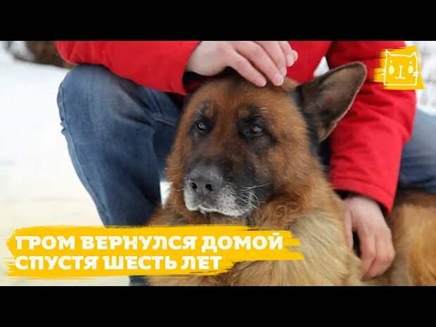 6 лет пес добирался до Крыма, но его вернули в Челябинск