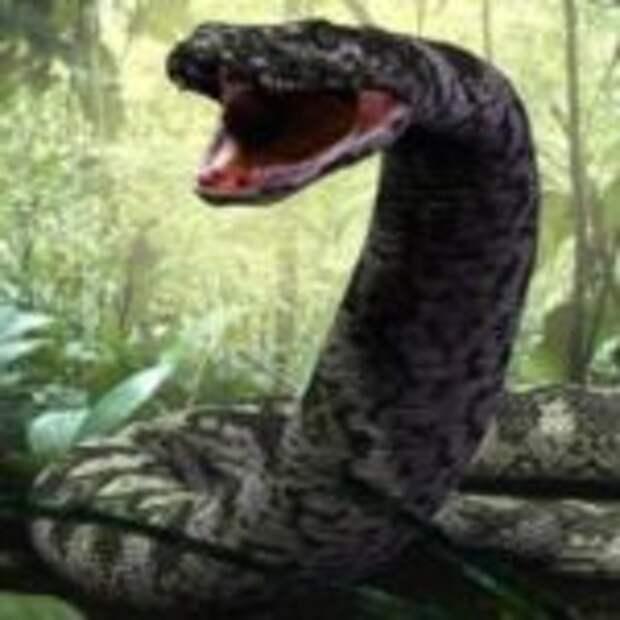 5 самых больших пойманных змей