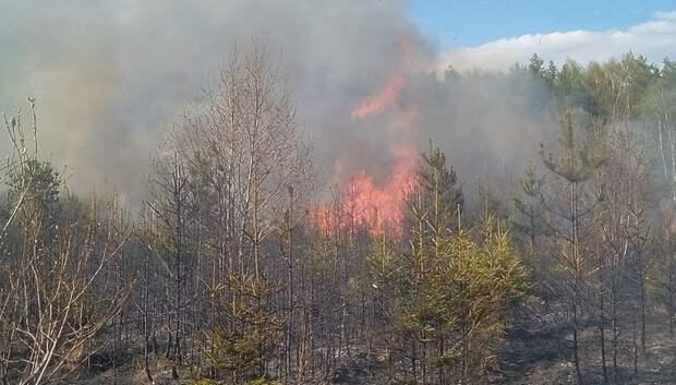 Около 150 лесных пожаров произошло в Подмосковье с середины апреля