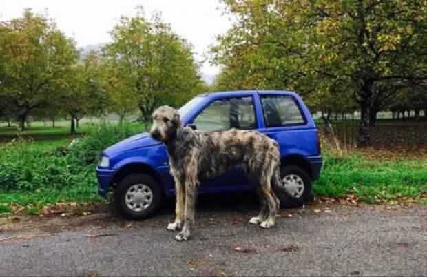 Собака и крохотный автомобиль