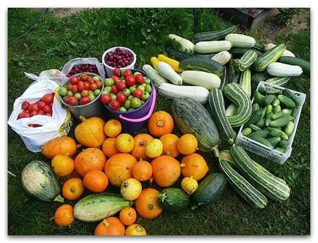 Как удвоить урожай - 10 полезных советов