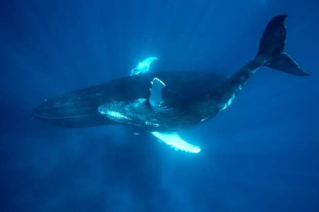 """7 фактов о китах в море интереснее того, что пишут о """"Море китов"""""""