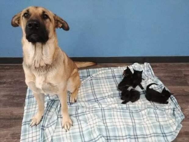 Собака не смогла пройти мимо замерзающих котят и согрела их своим телом