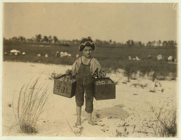 14. 5-летняя Сальвин занимается тем, что собирает клюкву на продажу. Нью-Джерси. 1910 год. америка, дети, детский труд, история