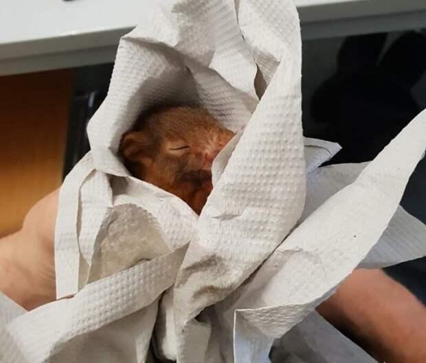 Мужчина отбился от дикого животного с помощью полиции!