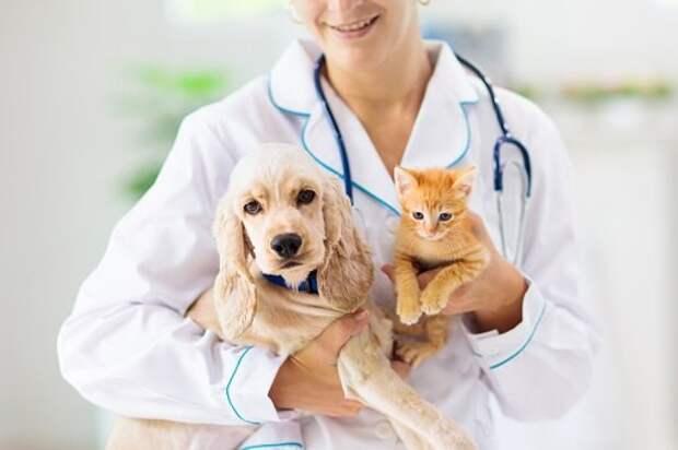 В ветеринарном участке на Отрадной бесплатно вакцинируют домашних животных