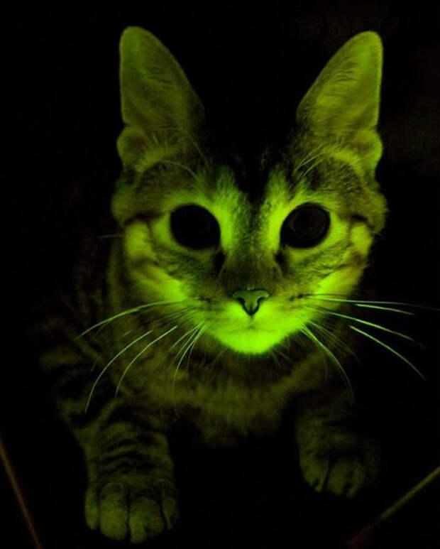 Генетически модифицированные домашние животные