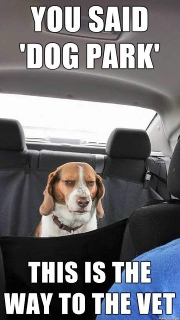 9. Воплощённое недовольство ветеринар, животные, милота, собаки