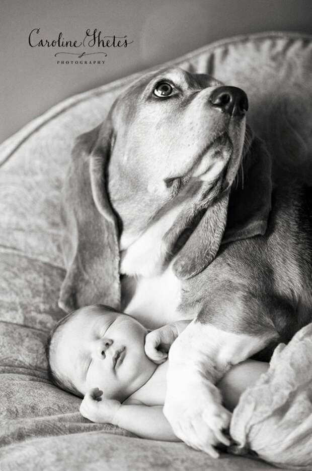 младенцы и собаки первая фотосессия (8)
